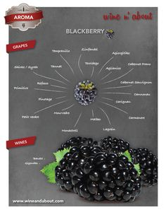 AROMAS: Blackberry #wine #infografía