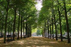Lange Voorhout, Den Haag