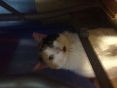 My oldest pet....Sassy