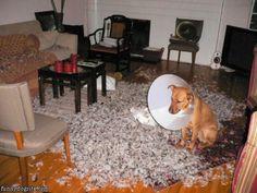 Top 20 des chiens pris en flagrant délit de bordelisme