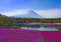 fioritura ciliegi in Giappone 2