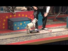 The Tricky Dogs Show