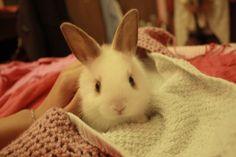 Cute tiny rabbit.