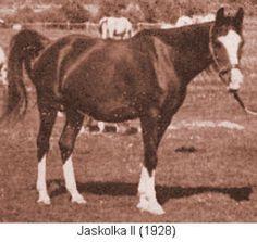 Jaskolka II