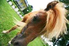 Horses, History, Animals, Beautiful, Historia, Animales, Animaux, Animal, Animais