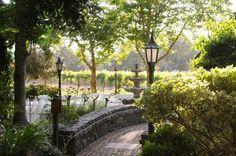 Napa valley Harvest Inn: Vineyard View