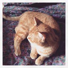 #pet #cat #catlover #catsgram #catstagram #instapet #cute #love #kitty #kitten #puppy #beauty #reverse #redcat #novella #orchidea #novellaorchidea #ricardo #tronconi #racconti #raccontierotici #eroticnovel #ebook