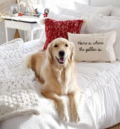 UPDATE: The winner of our pillow giveaway is @gus_the_golden! Congratulations!  We are so excited to team up with @throw.pillow for a pillow giveaway!  They would make a wonderful Christmas present!  We love that their mission is to help provide beds to kids in need! For every 10 pillows sold, Throw provides a bed to a child in need!  This contest will run for 48 hours only. Must be in USA. Good Luck! .  To enter:  1. ➡️Must follow @thegoldensrule and @throw.pillow  2.➡️Must tag 2 p...