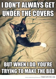 So true!  This is my cat everytime... hehe