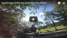Squirrel stole GoPro camera and gives best POV EVER funny video best humor website