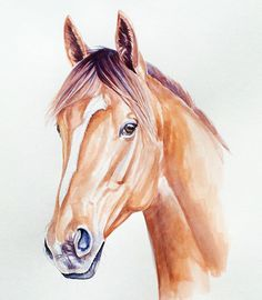 'Extreme Choice', who racing at Flemington this Saturday! Horse Head Drawing, Horse Drawings, Cool Drawings, Watercolor Horse, Watercolor Animals, Watercolor Paintings, Pencil Drawings Of Nature, Horse Sketch, Horse Illustration