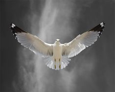 Bird Art Bird Photography Limited Edition Bird Art by susieloucks, $100.00