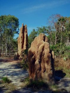 Litchfield National Park: Giant grass termite mounds Northern Territory At Litchfield NP I'd rather recommend the waterfalls. That's what makes it special! Australia Tours, Western Australia, Australia Travel, Brisbane, Sydney, Melbourne, Tasmania, Litchfield National Park, The Great Outdoors