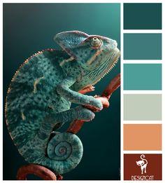 Chameleon: Teal, Pastel, Green, Blue, Terracotta, Brown - Colour Inspiration Pallet