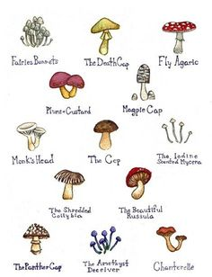 Mushrooms Watercolor Art Print by KateDolamore on Etsy, $18.00