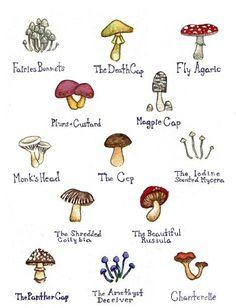 Mushrooms Watercolor Art Print. $18.00, via Etsy.
