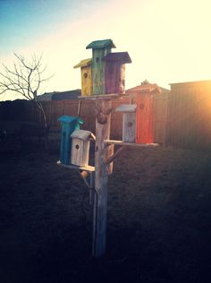 Repurposed fence into a birdhouse community 2014