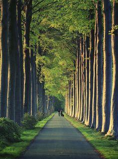 West Flanders, Belgium (by Mathijs Delva)
