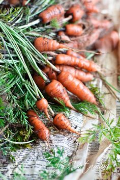 Carrot- the last crops from my garden. by Cintamani ;-), via Flickr