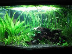 Aquarium Design, Aquarium Ideas, 20 Gallon Long Aquarium, Aquascaping, Nature Aquarium, Running Tanks, New Tank, Paludarium, Cichlids