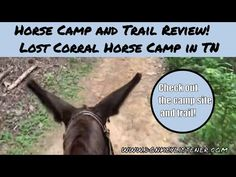 Lost Corral Horse Camp Review {Horse Camping with my Donkey} - YouTube Horseback Riding Trails, Horse Camp, Donkey, Lost, Camping, Horses, Youtube, Campsite, Donkeys