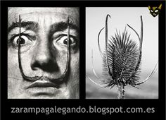 Zarampagalegando: Parecidos razoables. Dalí & cardo