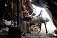 """""""Very few [articles depicting the red and white amanita mushroom ingesting shamans of Siberia as male] mention that many antler clad shamans in the northern regions were--& still are--female. In fact the leader of the Mongolian Reindeer People, according to this source,  is a 96-year-old shaman known as Tsuyan."""""""