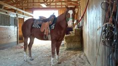 Charli Horse AQHA gelding... all around horse.. Needs a youth rider on him!