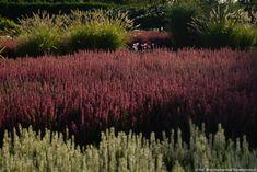 ogród wrzosowy