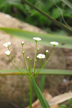 Trend Ein Blog ber Garten und Pflanzen Keramik und T pferarbeiten