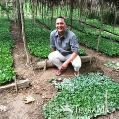 TerraMica's seedling project to replenish #coffee #trees in #Mexico, our own Patrick pictured here while he was working the project. #TerraMica #agriculture