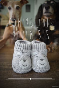 31 trendy baby announcement ideas with pets Cute Pregnancy Announcement, Baby Announcement Pictures, Pregnancy Announcements With Dogs, Baby Announcement Facebook, Pregnancy Announcement Photography, Pregnancy Signs, Pregnancy Care, Pregnancy Workout, Baby Pictures