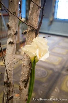 White calla lilies were used to decorate this birch Chuppah