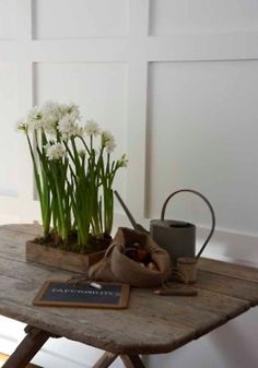 plant bulbs now for paperwhites at Christmas