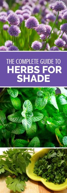 Trying to decide what to do with that shady patch in your garden? Why not try growing herbs! This article discusses a range of herbs that will grow successfully with only minimal sunlight - meaning you can fit them into any yard no matter what the conditi Gardening For Beginners, Gardening Tips, Flower Gardening, Gardening Services, Gardening Quotes, Gardening Books, Growing Herbs In Pots, Culture D'herbes, Pot Jardin