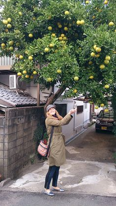 Yuzu tree by Otomodachi, via Flickr