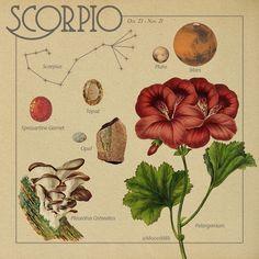Collage Mural, Photo Wall Collage, Picture Wall, Zodiac Art, Scorpio Zodiac, Zodiac Signs, Taurus, Horoscope, Print Poster