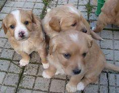 Rimedio naturale contro le pulci per i nostri cani | Ambiente Bio