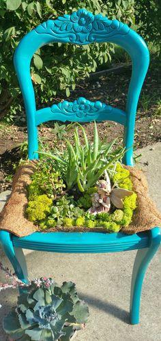 Fairy succulent  garden in a chair.