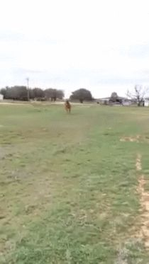 Horse Brings His 'lady' a Fresh Bouquet of Hay