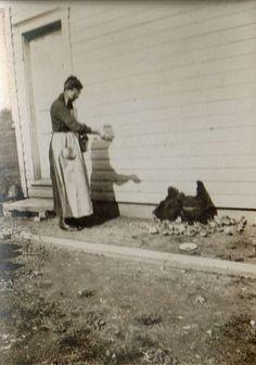 Feeding Chickens #chicken #chickens