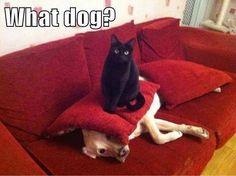 Perro y gato  #