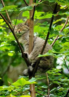 They can sleep anywhere I Love Cats, Crazy Cats, Cool Cats, Beautiful Cats, Animals Beautiful, Kittens Cutest, Cats And Kittens, Kitty Cats, Cute Funny Animals
