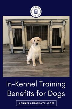 You can gift your pet a designer dog crate. In-crate training will help a dog to stay calm and stress-free. Best Dog Training, Crate Training, Training Tips, Small Puppies, Dogs And Puppies, Small Dogs, Dog Grooming Shop, Cool Dog Houses, Best Dog Toys