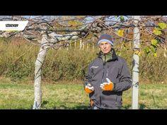 Errori comuni - potatura del kiwi - guida con consigli per la potatura - YouTube Kiwi, Canada Goose Jackets, Youtube, Gardening, Olive Tree, Green, Plant, Youtubers, Youtube Movies