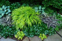 Add color and texture to your garden without flowers!