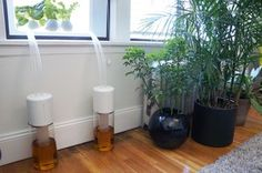 Nimbus - hydroponic system