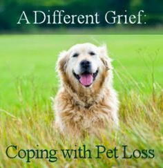 Grief Healing™: Pet Loss: Is It A Different Kind of Grief?   He looks like my beloved Brodie.... miss you big dog!  xou