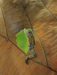 HELLO ;-)))))) So tired ..... Lizard