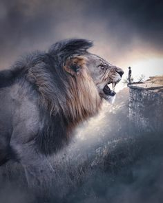 Simple Very Cool Matte Photoshop Actions – animal wallpaper Lion Images, Lion Pictures, Giant Animals, Big Animals, Stuffed Animals, Lion And Lioness, Lion Of Judah, Tier Wallpaper, Animal Wallpaper